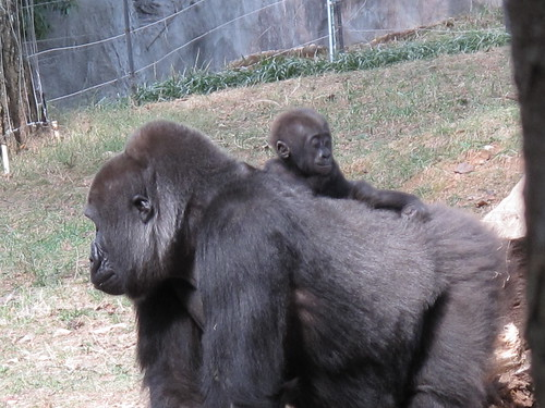 Zoo 0279