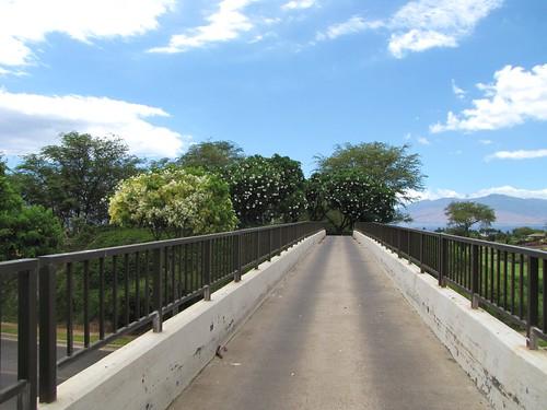 Maui Chiaki 895