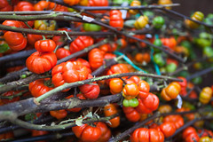 Lrrach market /11 (dive-angel (Karin)) Tags: red bw germany deutschland market pumpkins decoration colourful markt baden lrrach bunt dekoration 2470mm wochenmarkt nichtessbar eos5dmarkii lrrachmarket krbisseamstiel