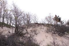 IMG_2956 (sandy richard) Tags: geology wildwood wildwoodstatepark newyorkstateparks longislandbeaches sandyrichard longislandgeology sandrarichard wildwoodstateparkgeology