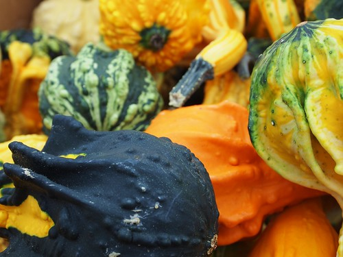 the squash gourds at the Market!
