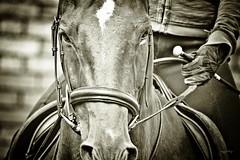 untitled-131 (2) (Tony Golding) Tags: park horse canon centre equestrian hacking equine sponsor donate dressage reining bedgebury charityride hospiceintheweald cancerresearchuk justgiving 400d tonygolding heavyhorsephotography gabriellaatkinson emmawhittington sponseredride forgetmenothere