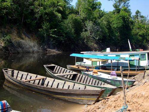 Amazonia201150