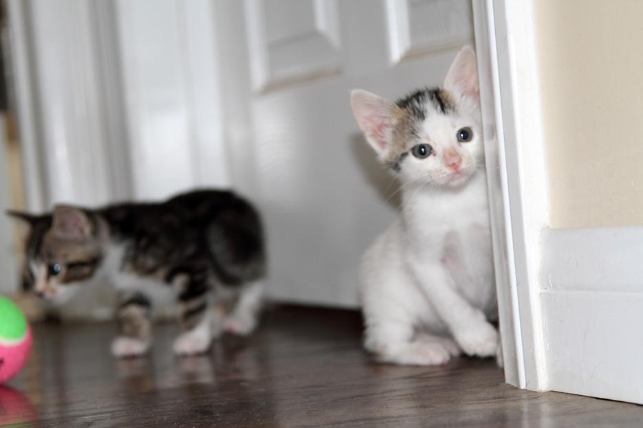 092111_kittens15