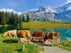 Lac Retaud-Alpes vaudoises (jd.echenard) Tags: montagne ngc vaches vaud oldenhorn alpesvaudoises coldupillon lacretaud abigfave paysagesuisse switzerlandlandscape micarttttworldphotographyawards micartttt glacierdesdiablerets ormontsdessus schweizerlandschaft typiquementsuisse lakeofretaud lakeretaud