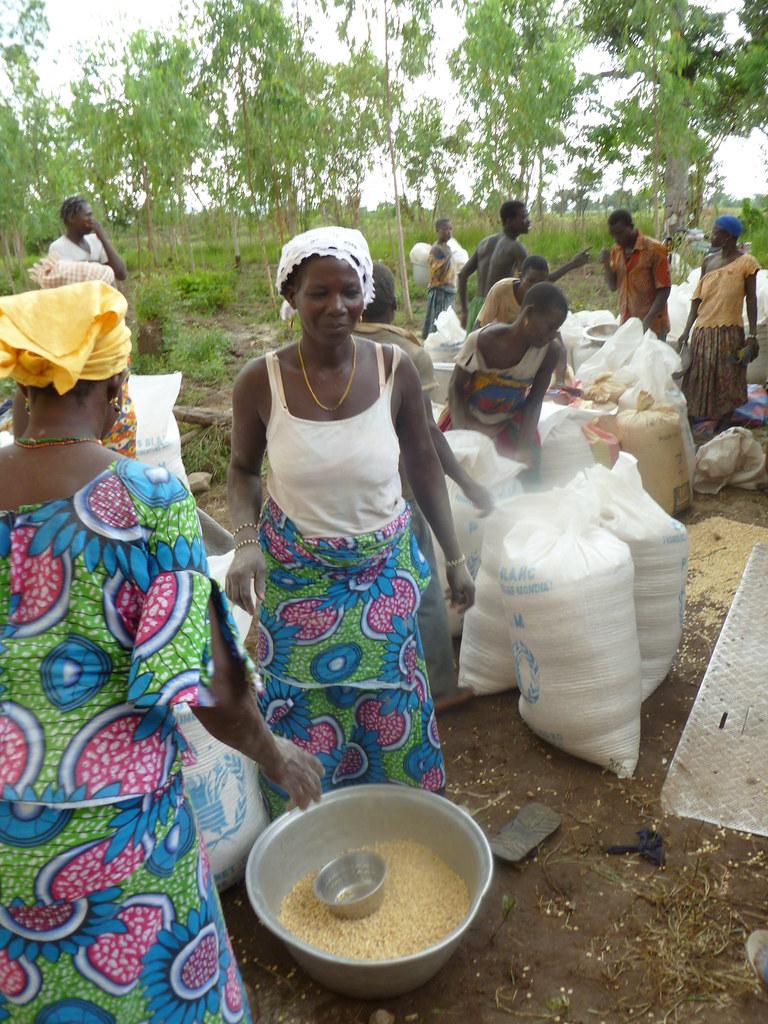 Vente groupée de céréales Togo