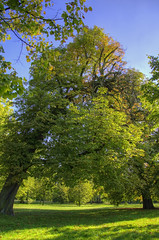 Always together! (yorkshire stacked) Tags: park autumn trees sky london love grass leaves lights leaf nikon colours shadows anniversary sunny september together hdr tangled bracketing bonded inseparable photomatix nikkor18105mmvr nikond7000 mattomatto