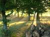 Faulquemont, Lorraine (France, Frankreich): Les sous-bois au petit matin! Undergrowth in the early hours! Das Unterholz am kleinen Morgen (Histgeo) Tags: france tree nature frankreich niceshot arbre baum petitmatin forêt undergrowth wow1 wow2 wow3 wow4 sousbois unterholz earlyhours wow5 faulquemont mygearandme mygearandmepremium mygearandmebronze mygearandmesilver mygearandmegold blinkagain dblringexcellence tplringexcellence ruby10 histgeo bestofblinkwinners blinkagainsuperstars ruby5 ruby15 blinksuperstar blinksuperstars flickrstruereflection1 flickrstruereflection2 flickrstruereflection3 flickrstruereflection4 flickrstruereflection5 flickrstruereflection6 flickrstruereflection7 eltringexcellence flickrstruereflectionexcellence trueexcellence1 trueexcellence2 trueexcellence3 kleinenmorgen rememberthatmomentlevel1 rememberthatmomentlevel2 rememberthatmomentlevel3 ruby20 vigilantphotographersunite vpu2 vpu3 vpu4 vpu5 vpu6 vpu7 vpu8 vpu9 vpu10