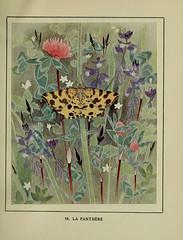 Anglų lietuvių žodynas. Žodis yellow milkwort reiškia geltona milkwort lietuviškai.
