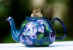 The Mad Hatter (SavingMemories) Tags: cute mouse rodent squirrel critter chipmunk movies teapot chippy themadhatter vintageteapot grandmothersteaset savingmemories suemoffett royalstanleywarejacobeanteaset usedfeb122012