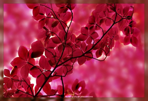 Color pasión para este finde :) by Arice39