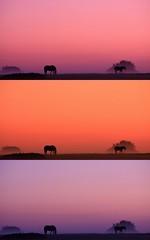 Jument et son poulain dans la brume (Stphane Gavoye) Tags: cheval montage aurore faune