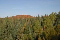DSD_7686 (Greying_Geezer) Tags: autumn ontario canada fall colors colours scenic trains autumncolours railways railroads saultstemarie on algoma agawacanyon traintour