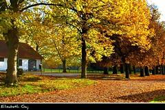 LUND AUTUMN 085-1 (Elisabeth Gaj) Tags: autumn trees lund nature skne europa sweden natur sverige skandinavia szwecja elisabethgaj 100commentgroup