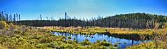 srie bleu d'automne en Jamsie panorama.jpg (Princedesglaciers) Tags: marais tourbire nordduqubec lebelsurquvillon jamsie