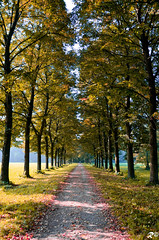 Road to autumn (Riccardo Brig Casarico) Tags: road autumn italy alberi photography photo reflex nikon europa europe strada italia fotografia nikkor autunno 18105 d5100
