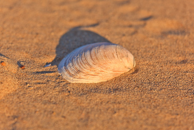 266/365 - September 23, 2011 - Sea Shell by the Sea Shore