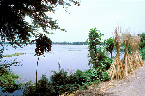 For half of the year, farmers tend their small rice fields here; with the rains ( and careful cooperation) the area becomes rich fish water. Bangladesh. Photo by Ebbe Schioler, 2002
