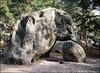 The Elephant (astrange) Tags: elephant climbing bouldering fontainebleau fujiga645zi fujiprovia400x120