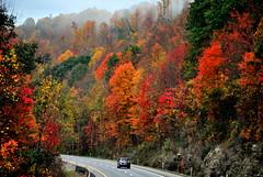 Drive into Autumn [Explore] (Peyton Carter) Tags: road autumn trees color fall beautiful season landscape highway scenery driving fallcolor roadtrip westvirginia autumncolor