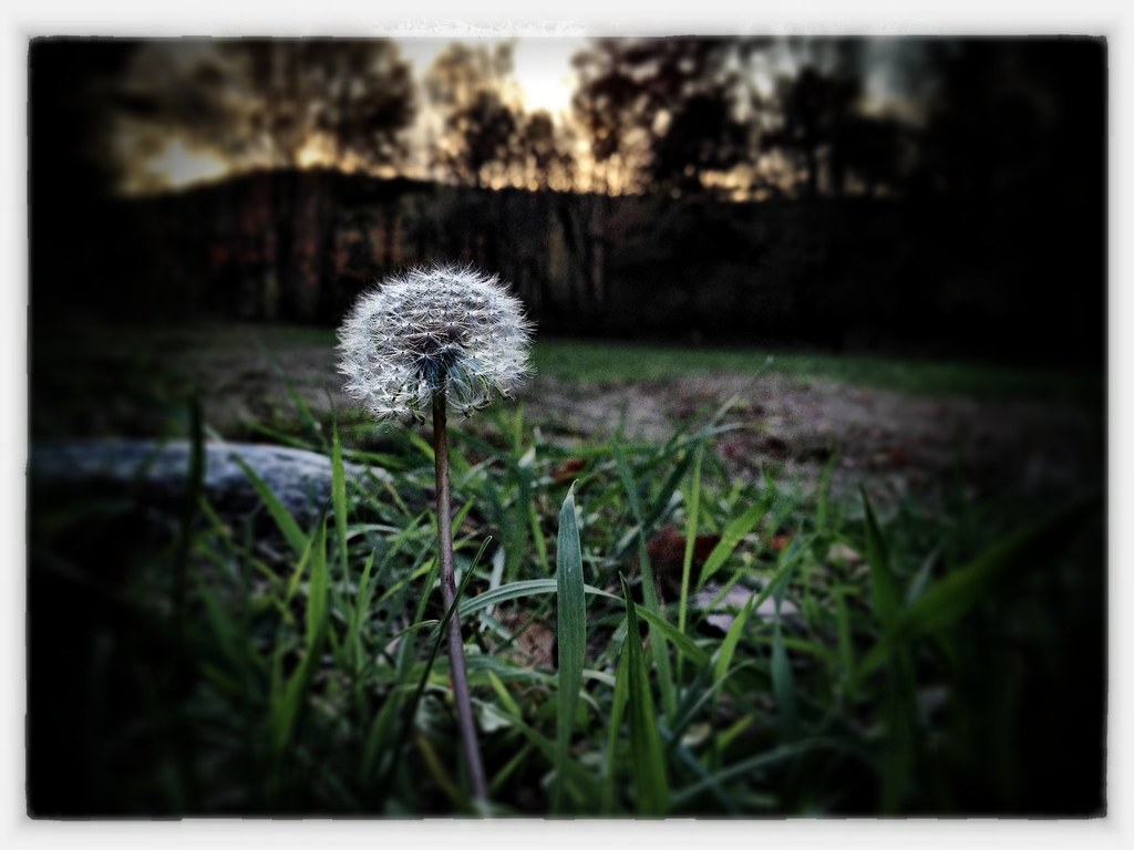 iPhone 4S - Edited with Snapseed