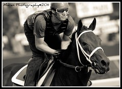 (EASY GOER) Tags: park horses horse sports training canon track exercise belmont racing athletes races rider equine thoroughbreds 400mm equines workouts tbracing