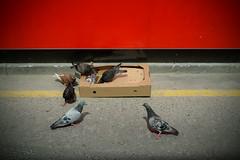 Box of pigeons (house of bamboo) Tags: road wood red london tarmac wall box pigeons 7 pizza cardboard seven redwall bricklane baked cardboardbox yellowline blackstripe