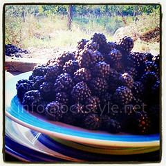 Fruit - Wild Blackberries n.2