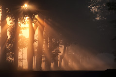 I dream of this ... behind a wall of sleep (pixelmama) Tags: trees orange mist fog sunrise golden sunrays sleepingbeardunes countrylane sunbeams gettyimages glenarbor micigan tunneloftrees chasinglight thesmithereens lakemichigancircletour idreamofthisbehindawallofsleep farmdayroad