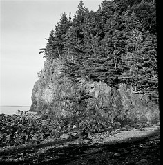 owl's head 3 (steve aimone) Tags: light cliff lighthouse house seaweed rocks head maine evergreens owls monhegan bluff owlshead midcoast