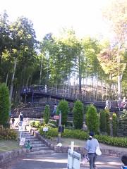 アスレチックのある冒険の森へ移動-あいかわ公園の写真