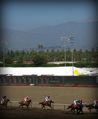 drollgirl horse races