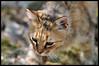 Concy (Ferdosky) Tags: 28 nikko gatto bestshot picinisco flickrbronze d300s 70200vrii ferdosky ferdinandodellavalle