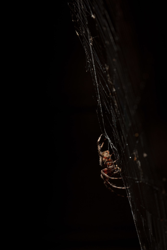 Spider, at night