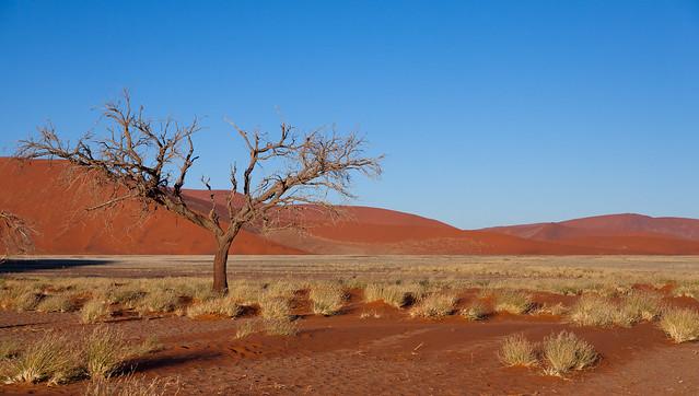Near Dune 45