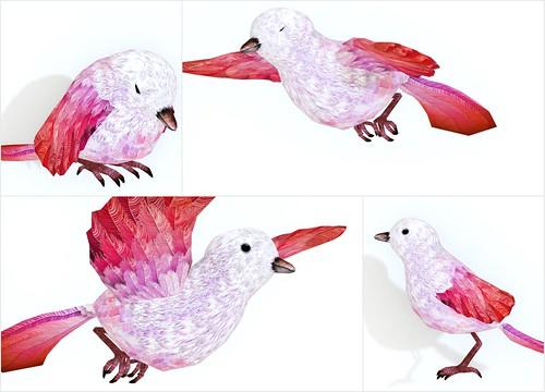 LOLO Pet Bird