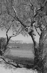 Tree Frames (Redeyes1966) Tags: trees sea blackandwhite beach coast crete spinalonga flickraward blinkagain