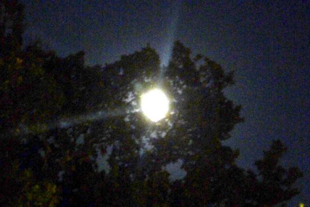 Mjesec kroz krosnju stabla
