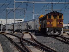 Loco 4486 (Photography Perspectiv) Tags: train diesel loco auburn amf waratah cityrail aset 4486
