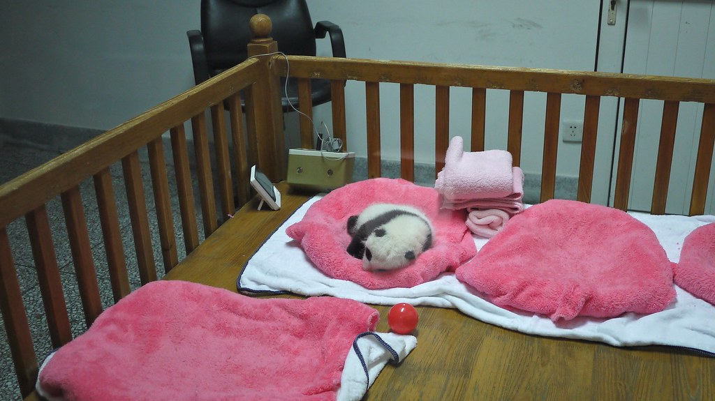 Baby Panda in Cot