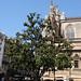 Siviglia: albero con carrozze