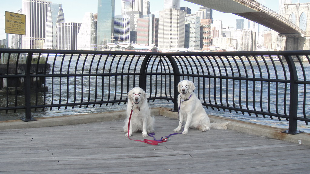 Daily Brooklyn Bridge Dogs 19 September 2011