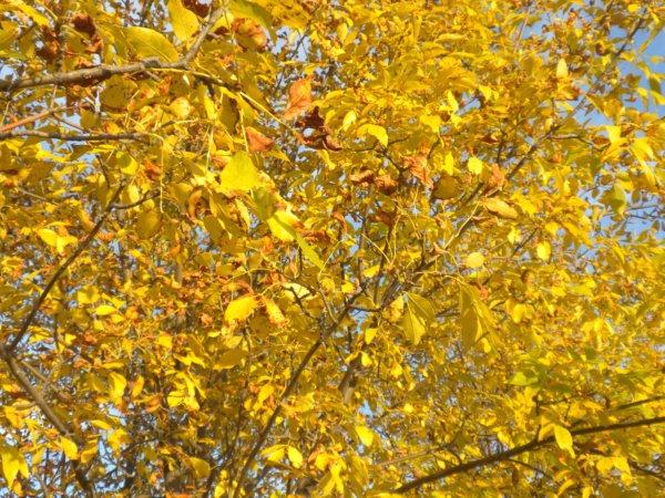 autumn 014