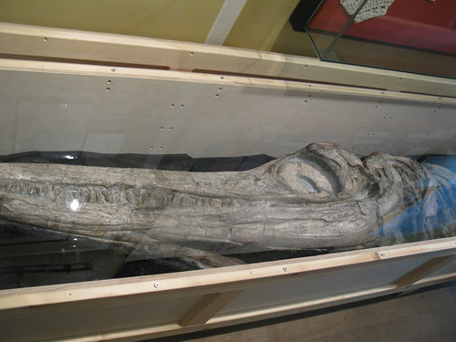 Anning's first ichthyosaur