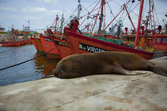 nappy time. (ANOXLOU) Tags: sky water argentina digital canon photography buenosaires nap day ships sealion touring mardelplata anoxlou