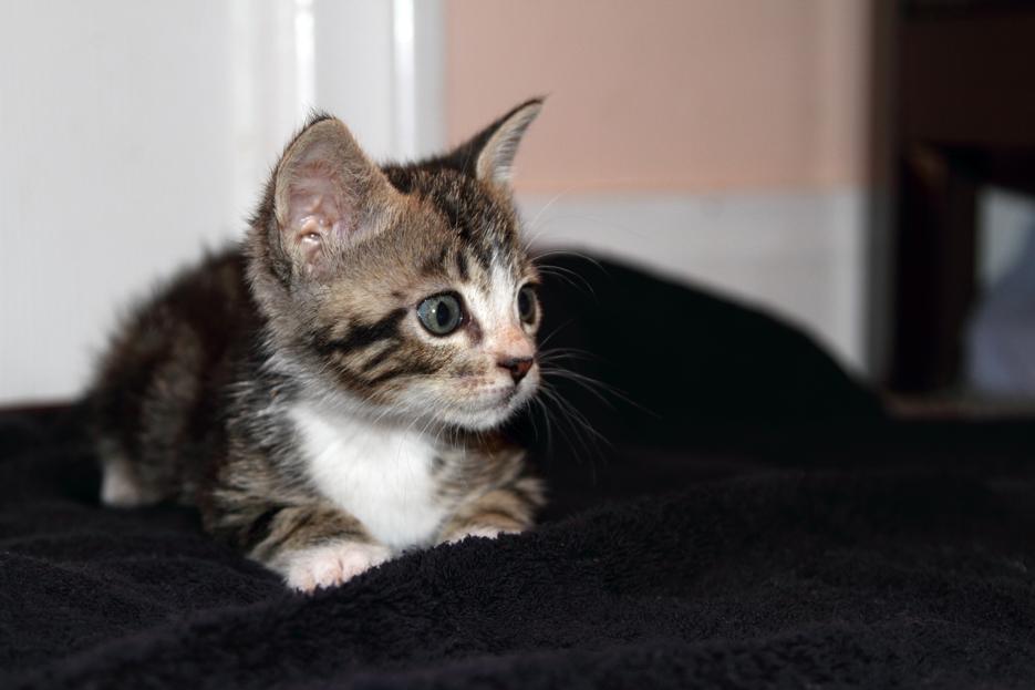 092111_kittens12