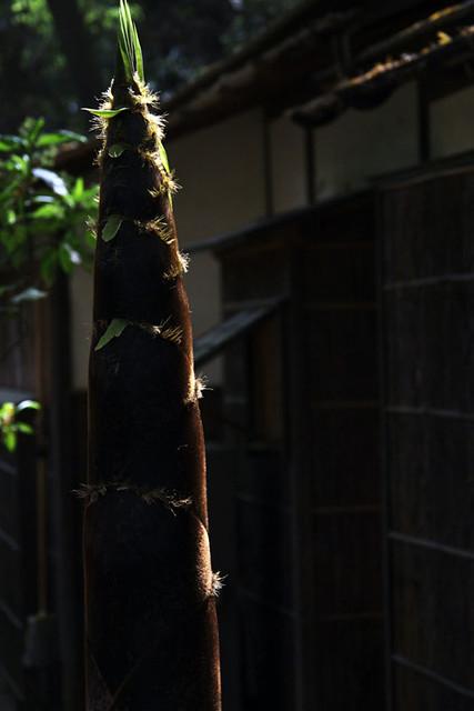 110430_133027_横浜_三渓園