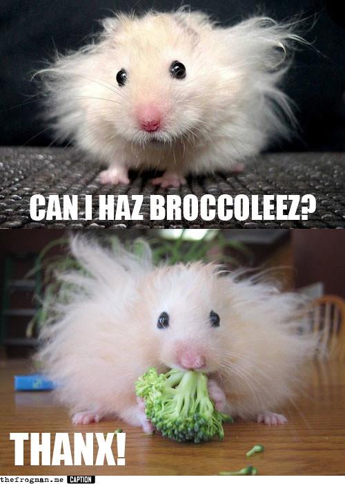 brocolies