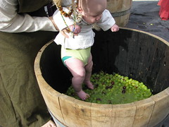 Baby's first grape stomp! (Falashad) Tags: baby sca barrel grapes grapestomp vinfest vinyar