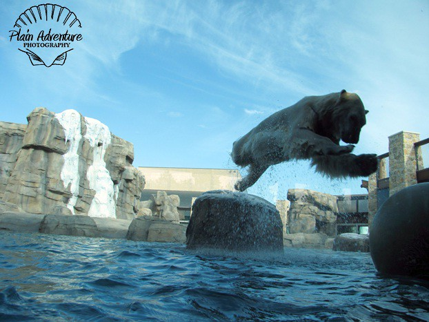 Polar Bear Leap